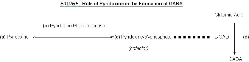 role of pyridoxine in the formation of GABA