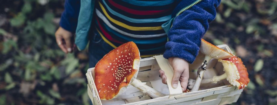 child carrying wild mushrooms